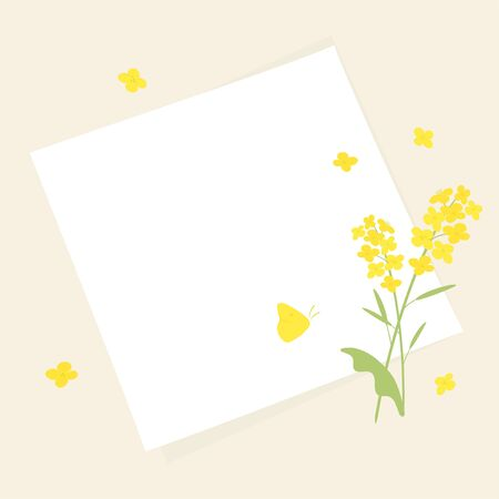 Vector canola flowers and white paper background illustration