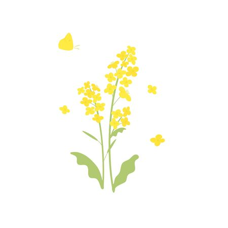 Vector canola flowers and butterfly illustration on white