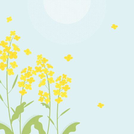 Canola flowers illustration on blue background 向量圖像