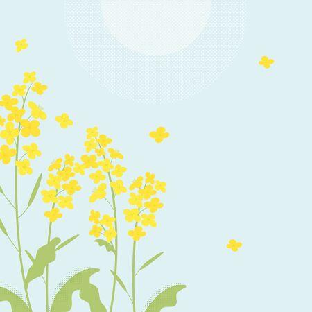 Rapsblumenillustration auf blauem Hintergrund
