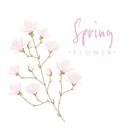 Vector illustration of Magnolia flowers on white background