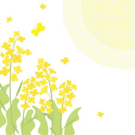 Vector canola flowers background illustration on white