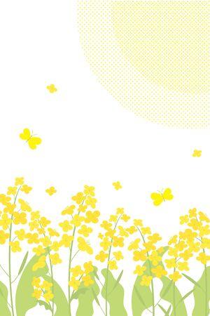 Vector canola flowers background illustration on white