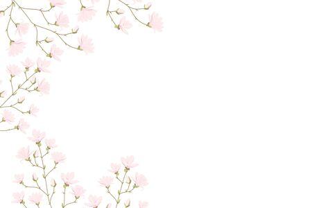 Vector magnolia flowers background illustration