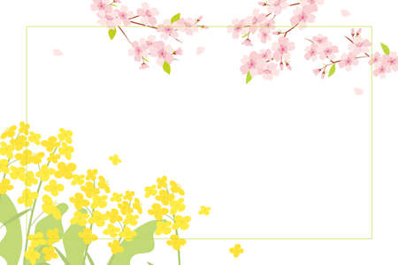Cherry blossom and canola flowers background illustration