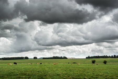 Dark low clouds over cattle field in UK countryside