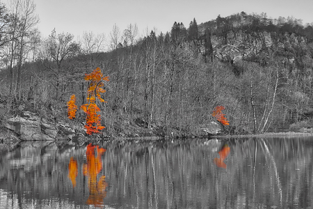 Autumn colors in the forest. Photo is black and white expect from two trees.