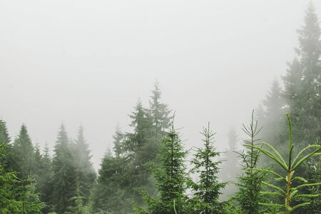 Photo from a campaign in the Carpathians during heavy fog. Hills covered with pine trees and green grass. Stock fotó