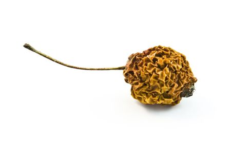 Old withered little apple with a tail. Stock Photo - 5934816