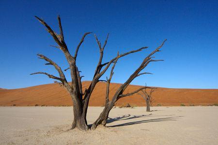 Mystic Dead Tree photo