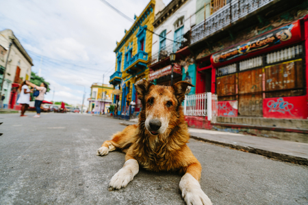 Dog in the colorful and vibrant area of La Boca, its Caminito in Buenos Aires.