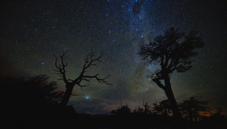 Night landscape with starry sky and trees in the National Park Los Glaciares. The Argentine Patagonia in Autumn