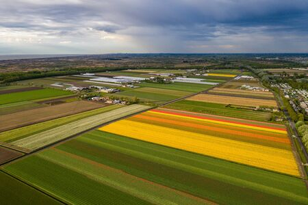 Aerial view of tulip planted fields in the Keukenhof district. Spring in the Netherlands.