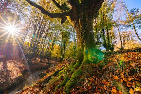 Colorful autumn at Otzarreta forest in gorbea natural park, Spain