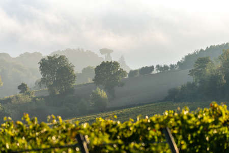 A grape field for wine. Vineyard hills. Autumn landscape with rows of vineyards. Tuscany, Italy. Stockfoto