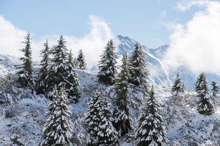 View of a forest covered with fresh snow and clouds near the Aletsch Arena. Switzerland in autumn