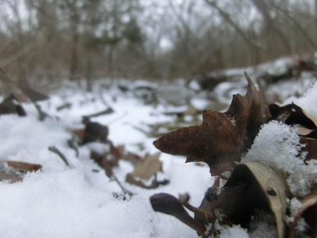 Decomposing leaf on the edge of a small creek in snow.