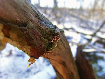 Growth on the shaded side of a tree branch.
