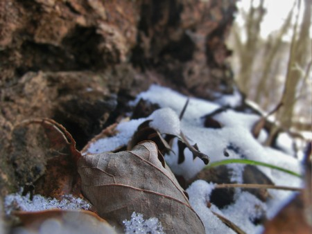 decomposing: Decomposing leaves in the shade of a fallen tree log on top of snow. Stock Photo
