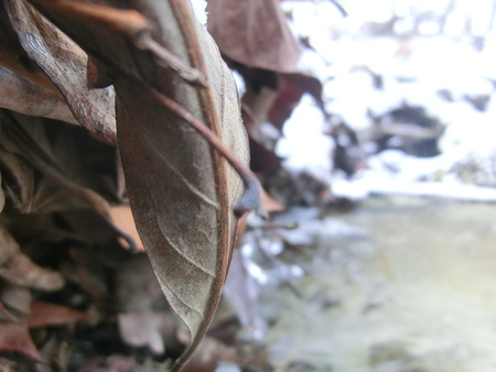 clutter: Leaf backside in focus stuck on a small ground clutter damn on a creek.
