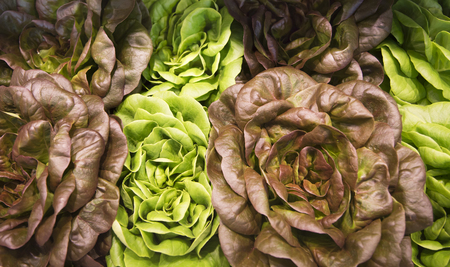 lettuces: Different colored lettuces in a produce market