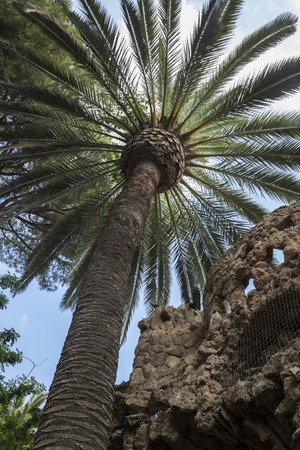 viaducts: Palm tree next to one of the Stone Viaducts carrying snaking paths, Park Guell, Barcelona, Spain Stock Photo