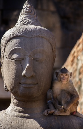 motherly: Crab eating macaque on Buddha statue in Lopburi ruins, Thailand Stock Photo