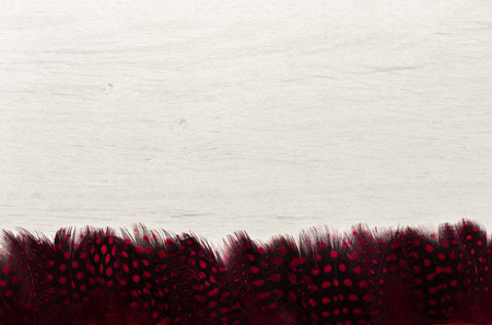 fringe: Red Guinea Fowl Feather Fringe