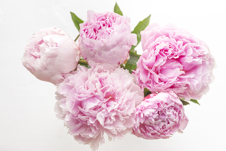 Bunch of five Pink Peonies from above on white background Zdjęcie Seryjne
