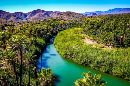 The blue-green Mulege river curves through a desert oasis of palm trees in Baja California Sur, Mexico