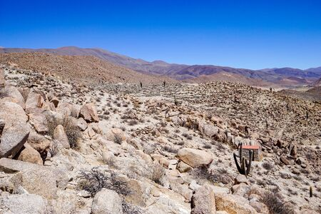 Rocky slopes and giant cacti at the pre-Incan ruins of Tastil in the high altitude puna altiplano desert near Salta in Argentina Banque d'images