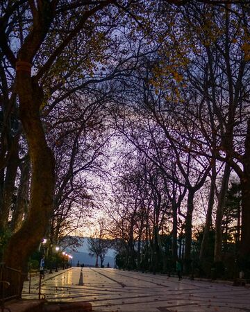 The white marble plaza of Alameda del Tajo park, under purple dusk skies with the silhouettes of bare trees in Ronda, in the Andalucia region of southern Spain