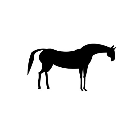solitary: A solitary black horse on a white background