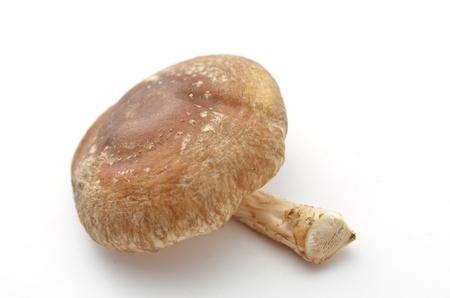shiitake mushroom Stock Photo - 18240350