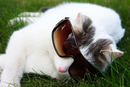field glass: photo of the white cat laying in the green grass and wearing sun glasses