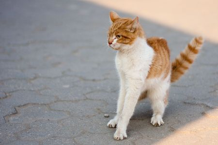 agressive: agressive street cat prepairing to attack Stock Photo