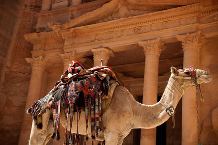 stoneworks: view of the petra treasury with camel in foreground Stock Photo