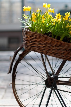 canestro basket: vecchia bicicletta con cesto di fiori nella strada di Helsinki, Finlandia (molto poca profondità di campo, messa a fuoco su fiori e cesto)  Archivio Fotografico