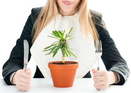 flower in pot: nice healthy business lunch for young business woman isolated on white with fork and knife in her hands (focus on flower) photo