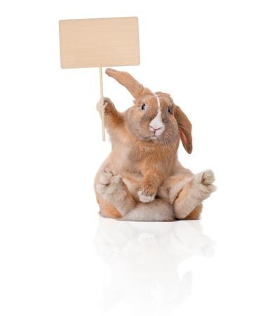 lapin: Lapin mignon et beau salon. Inscription dans sa patte sur la tête. Isolé sur fond, reflet blanc, beaucoup d'espace copie. Banque d'images
