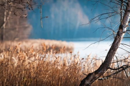 dismal: Beautiful scene of late fall with lonely bare birch and dry grass in foreground  Autumn landscape with pond or lake and wood afar in background  Sad and dismal season  Nature fading  Stock Photo