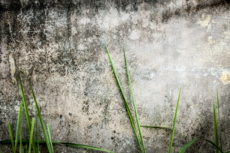 Dirty gray wall with black stains  Green grass near stonewall of old building  Seamless background  Moldy panel of house with plants in foreground  Rustic texture with dark spots  Urban exterior Stock Photo - 18533511