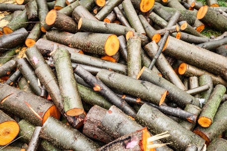 sawed: Heap of thin and thick wood logs. Cutted timber thrown off in pile. Rough lumber sawed up. Firewood for stove and heating power. Natural backgrounds and wallpapers.