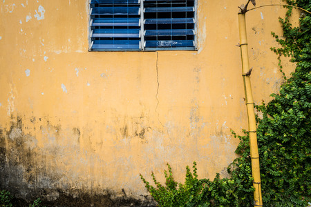 wall covering: Facade of aged house. Wall of grungy and cracked yellow stucco with blue shuttered window. Old broken bamboo standing in front of it and greenery covering right part of wall. Stock Photo