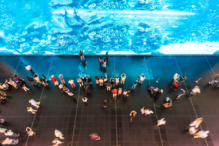 exhibition crowd: Lots of people watching huge aquarium with clear blue water, sea animals and divers in oceanarium. View from above. Ocean life display. Leisure and free time spending. Travelling and tourism.