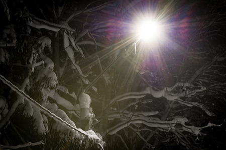 shining through: Street light shining through falling snow. Winter forest in night. Stock Photo