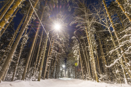 forest trees: Winter forest, road and trees covered with snow. Night scene, street lights along road.