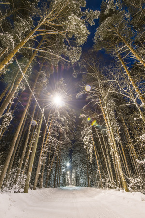 snow forest: Winter forest, road and trees covered with snow. Night scene, street lights along road.