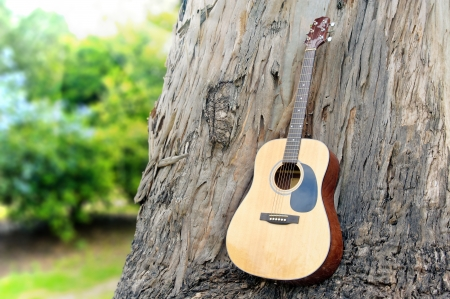 guitar on old wood wall trunk in nature  photo