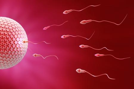 Espermatozoide y el óvulo Fecundación Foto de archivo